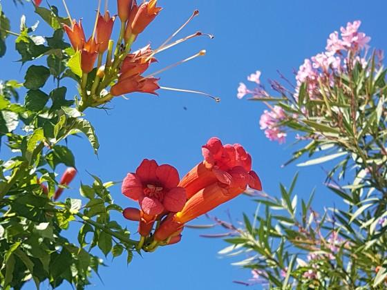 Flowers in Sardinia, Italy